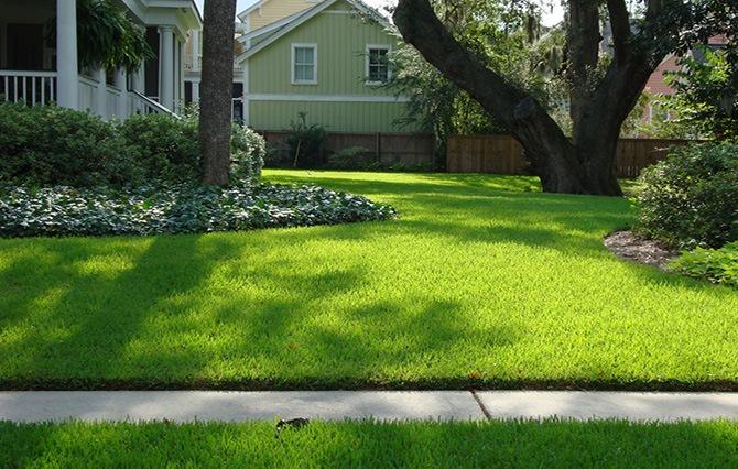 Ярко зелёная трава газона