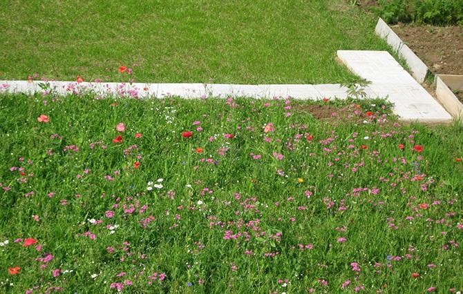 Газон с полевыми цветами