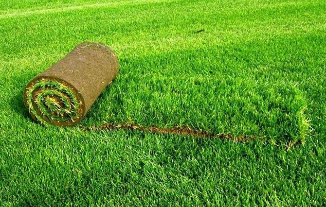Трава рулонного покрытия